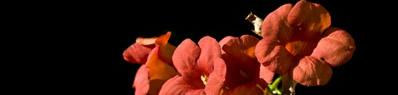 Una strada di fiori rossi